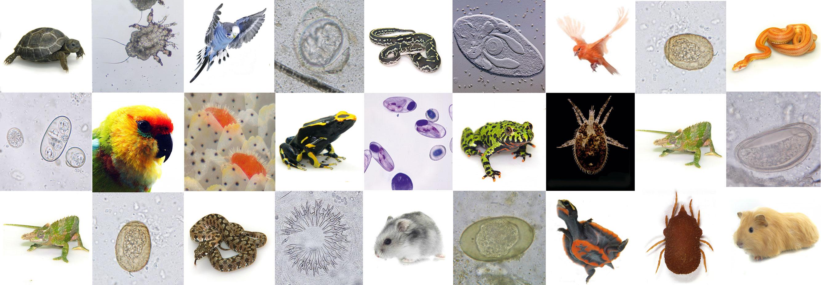 Parasiten so vielseitig wie Ihre Wirte